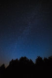 Night sky with bright stars. Against the background of tree crow Royalty Free Stock Image
