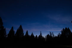 Night sky with bright stars and the tops of trees Stock Photo