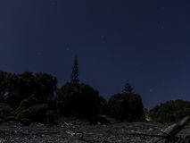 Night sky and driftwood from Onaero Beach, New Zealand Royalty Free Stock Images