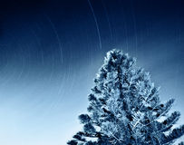 Night sky of falling stars. Night sky of falling shooting stars, dark space natural background, slow starry motion, winter Christmas time, tree forest with light Royalty Free Stock Photo