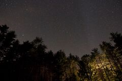 Night sky in forest