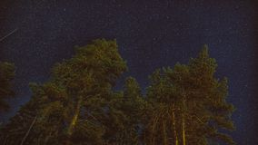 Night sky in the forest. Night sky forest star galaxy stock images