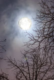 Night sky with full highly detailed moon and branches of trees Stock Image