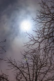 Night sky with full highly detailed moon and branches of trees Royalty Free Stock Photo