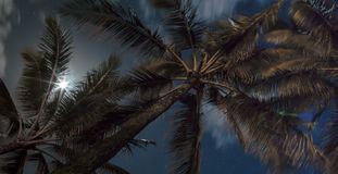 Night Sky and full moon above palm trees. Tropical time lapse of night sky stock footage