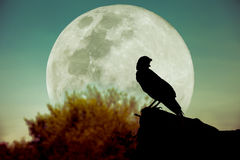 Night sky with full moon, tree and silhouette of crow that can b. Beautiful night sky with full moon, tree and silhouette of crow on stone that can be used for Royalty Free Stock Images