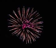 Night sky illuminated by a bright flower. Flowers fireworks illuminated night sky royalty free stock photos