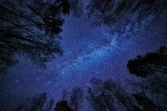 Night sky with the Milky Way over the forest and trees surrounding the scene. Stock Images