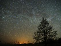 Night sky and milky way stars, meteor Cassiopeia and Cygnus constellation over swamp stock photography