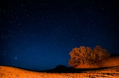 Night sky in moroccan desert Erg Chegaga. With orange dunes and trees royalty free stock photography