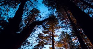 Night Sky Over Forest Treetops. Starry long exposure time lapse. Scenic Night Landscape with Stars and Milky Way. Mendocino National Forest, California stock video footage