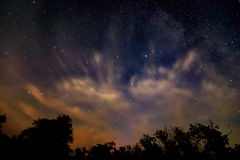 Night sky over forest Stock Image