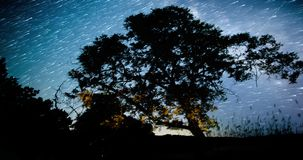 Night Sky Over Treetops. Star trail. stock video footage