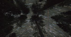 Night Sky Over Treetops. Starry sky, star field, milky way, and the universe. All visible above the treetops in this dark sky outdoors time lapse stock video