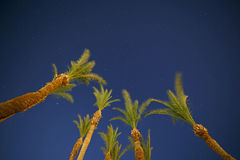 Night sky through palm trees. View on night sky through palm trees Stock Photography