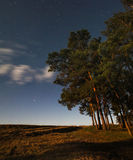 Night sky in pine forest Stock Images
