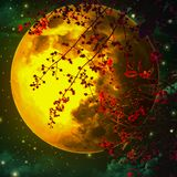 Night sky is romantic, with a large orange moon and Red leaf, floating beautifully, looking like one of the fairy tale scenes stock photos