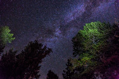 Night Sky in the Sierra Nevada. Incredible clear night sky in the Sierra Nevada. Camp fire lights the lower trees and flashlights bring out the green Stock Photos