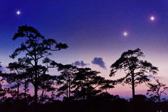 Night sky with silhouette tree. Clear night sky with silhouette tree background view at Phu-Kradueng national park Thailand Royalty Free Stock Images