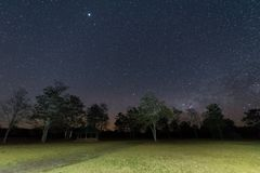 Night sky with star and tree Stock Photo