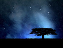 Night sky with stars. Tree silhouette against the night sky Stock Images