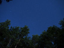 Night sky stars over forest Royalty Free Stock Image
