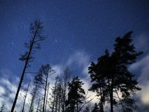 Night sky stars Cassiopeia constellations over winter forest royalty free stock photo