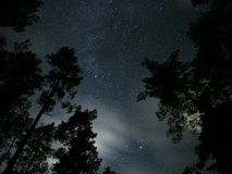 Night sky stars and clouds over forest Cygnus Lyra constellation  Royalty Free Stock Photo