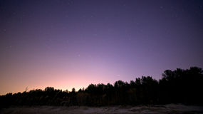 Night sky. With stars and forest Royalty Free Stock Photos