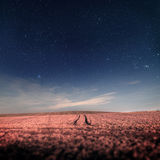 Night sky with stars over the field with traces Stock Photography
