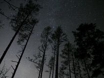 Night sky stars over forest Stock Image