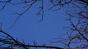 Night Sky with Stars. Time Lapse. Trees Branches Silhouette Stock Images