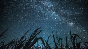Night sky timelapse. With corn field and Milky Way stock video footage