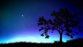 Night sky and tree loop stock footage