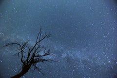 Night sky Tree silhouette stock photography