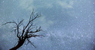 Night sky Tree silhouette timelapse. Time lapse video of a silhouette of a tree in front of the Milky way's stars at August stock video footage