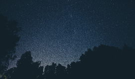 Night sky and tree silhouettes Royalty Free Stock Images