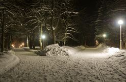 Night in snow-covered park royalty free stock images