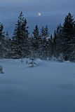 Night snow forest. Cold forest. trees in snow Royalty Free Stock Photo