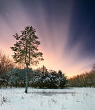 Night snow forest Royalty Free Stock Photos