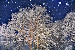 Night Snow Royalty Free Stock Photo