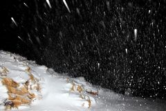 Night snowfall Stock Images