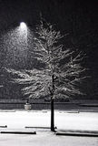 Night Snowfall. A night light during a snow storm Stock Images