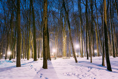 Night Snowy city park in light of lanterns at evening. Winter Ni Royalty Free Stock Images
