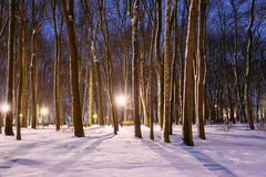 Night Snowy city park in light of lanterns at evening. Winter Ni Royalty Free Stock Photography
