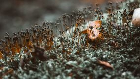 Moss on a tree stock photography