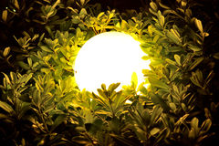 Night sphere light through leaves and branches Royalty Free Stock Photography