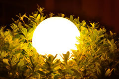 Night sphere light through leaves and branches Royalty Free Stock Image