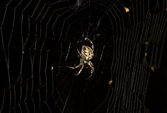 Night Spider. Quite a big spider standing on his net in night Royalty Free Stock Image