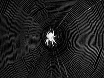 Night spider in center of web. Black-and-white shot of a night spider waiting head down in its sticky rounded orb web - native in Australia. Monochrome negative Stock Photo